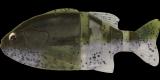 #S-309 ウォーターメロンペッパー/ホワイトベリー